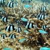 イパオビーチを徹底的に楽しむための3つのポイント