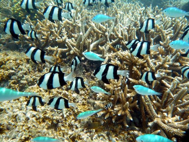 イパオビーチの小さい魚