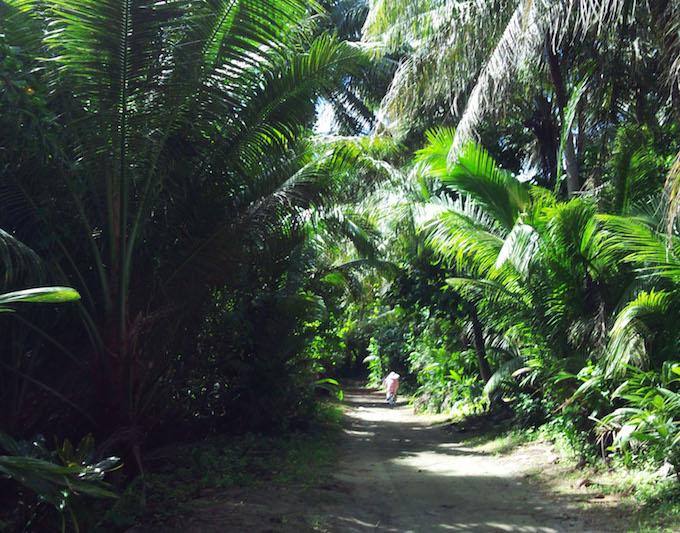 ココス島の遊歩道のヤシの木