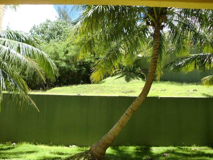 グアムプラザホテルのベランダから見たヤシの木