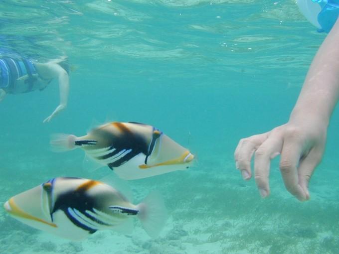 グアムのカラフルな魚