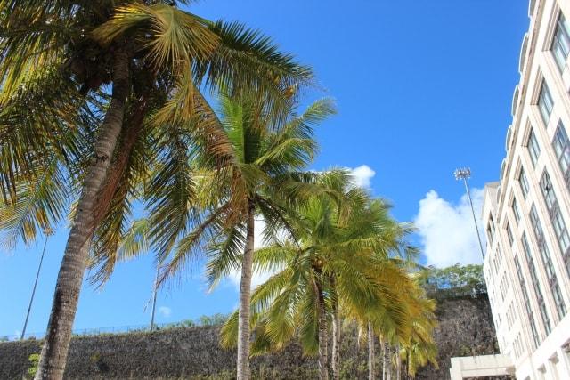 グアムのホテルとヤシの木