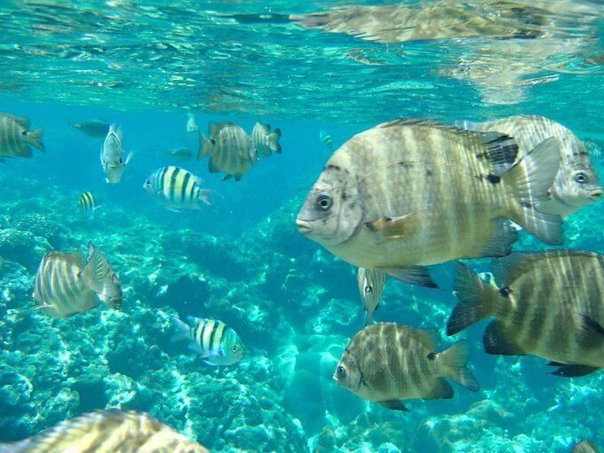ガンビーチの魚