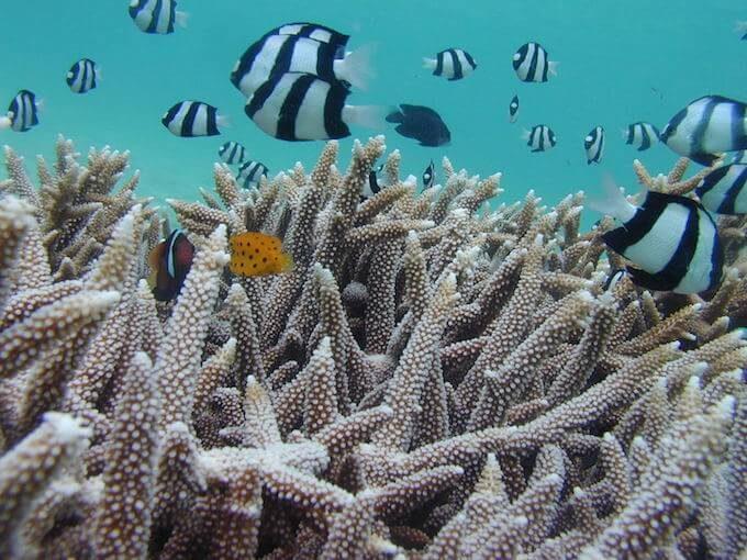 イパオビーチの魚とサンゴ
