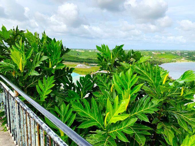 パゴ湾展望台と緑の葉っぱ
